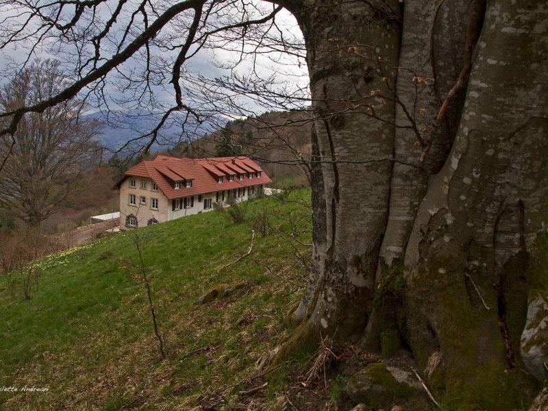 Photos extérieures 2021 - Domaine Goldenmatt (8)